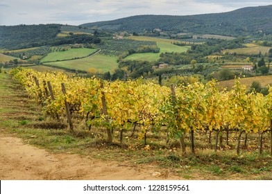 View of the hills and autumn vineyards near the city of San Gimignano, Tuscany, Italy