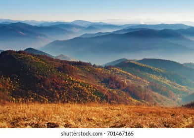 View of hills of a smoky mountain range covered in red, orange and yellow deciduous forest and green pine trees under blue cloudless sky on a warm fall day in October. Carpathians, Ukraine