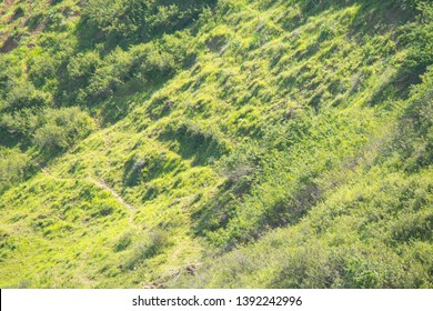 view of the hillside with green vegetation and shrubs