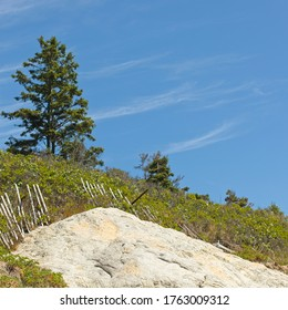 View of a hillside with isolated tree at the top against a clear blue sky with wispy clouds and a large rock in foreground on a summer day