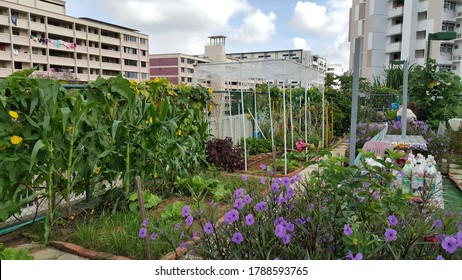View of the home based roof top farming organic garden with various vegetables an plant. It is the cultivation of fresh produce on the top of buildings within the CBD of major cities
