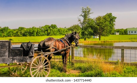 View of horse with buggy on Amish farm; pond in front of horse