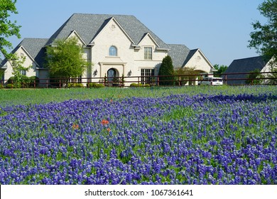 View of a house in the countryside with a pasture full of Blooming Texas Bluebonnet Wildflowers during spring time