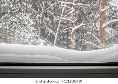 view from the house at the winter forest