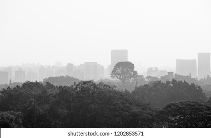 View of Ibirapuera park and in the background residential and commercial buildings photographed in black and white.