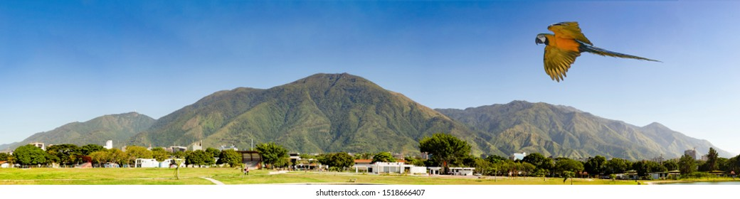 View of the  iconic  Caracas mountain el Avila or Waraira Repano and flying macaw.