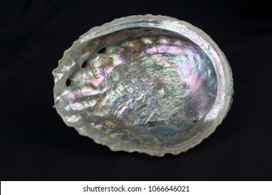 A view of the inside of an empty abalone shell showing the beautiful iridescent colors. This shell is used to make jewelry and home decor items.