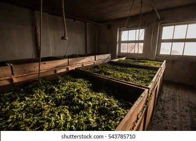 View inside a factory where tea leaves are drying in.