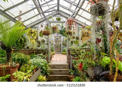 View of the interior of a nursery greenhouse with various plants