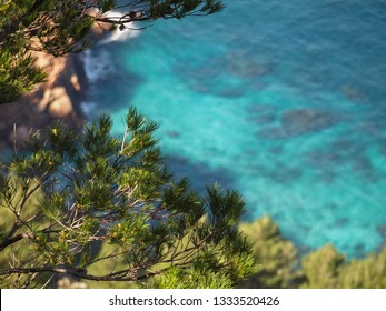 View into a cove with turquoise water with a green branch of a pine tree in the foreground and rocks and water in the blurred background.