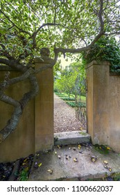 view into a formal garden orchard looking through an open metal gate