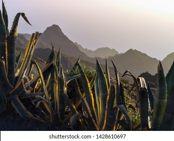 View into the Masca mountains on tenerife at dusk. in the foreground large agaves with yellow leaf margins. The Masca Mountains are in the semi-shade and has a shadowy ambiente.