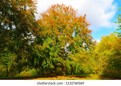 View into a public park with autumnal colorful trees in the sunlight