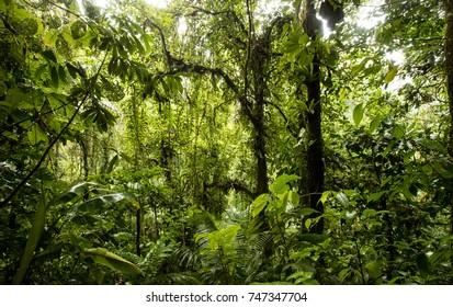 View into the rain forest - Costa Rica