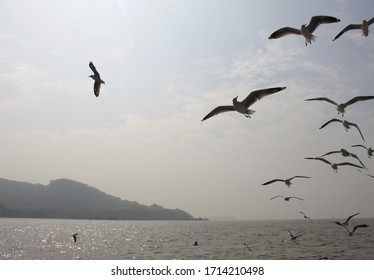 View of the island of Elephanta (Mumbai) in shades of gray. In the foreground, seagulls flying behind the ship.