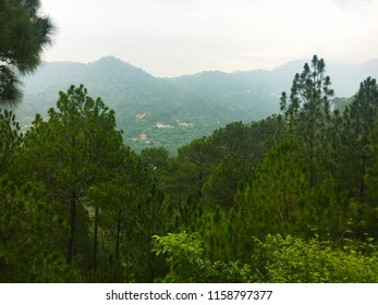 A view of Kasauli hills near Shimla in monsoon with pine trees and vast forests