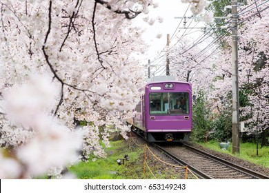 View of Kyoto local train traveling on rail tracks with flourishing cherry blossoms along the railway in Kyoto, Japan