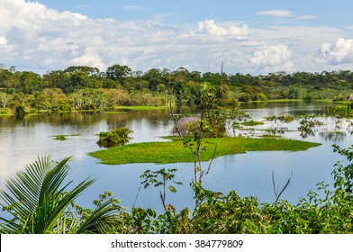 View of the lake in the Amazon Rainforest, close to Manaus, Brazil