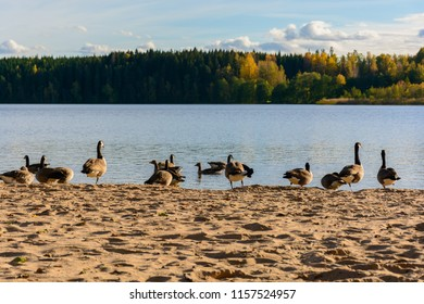 View of lake with bunch of goose