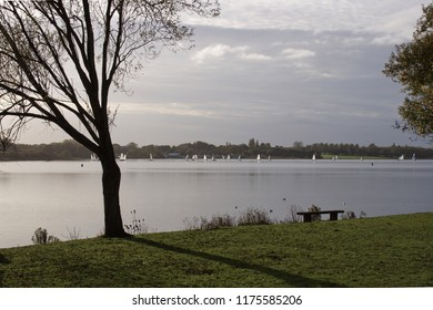 View of a lake in the dusk (with the silhouette of a tree).