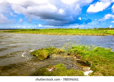 View of lake, landscape, panoramic vista of grass on shore, water and wetlands with reeds