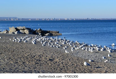 The view of lake Ontario, in foreground an swarm of seagulls and on the horizon the city of Burlington, Ontario, Canada, under sunshine.