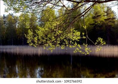 View at Lake Saimaa