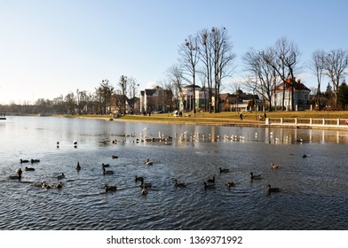 View of the lake with wild birds in early spring, in the background beautiful large rich houses, the city of Kaliningrad, March 2019.