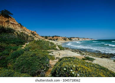 View of Landscape with Cliff and Dunes at the Beach near Albufeira Portugal in Summer with local vegetation flowers and plants