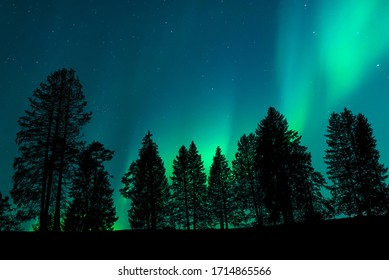 View of a landscape with the silhouette of a forest with the night sky and the northern lights in the background