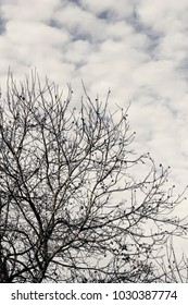 View to leafless tree in autumn cloudy day.