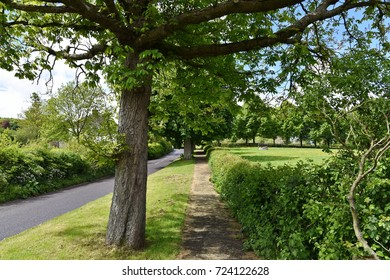 View of a Leafy Path alongside a Country Road