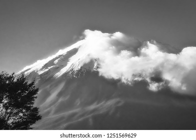 View of the legendary Mount Fuji from Fujikawagichiko resort, with cloud cover and a tree in the foreground in black and white, Japan.