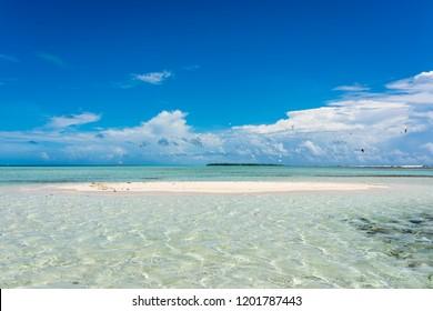 "View of the a little white sandbank with sea birds next to the barrier reef  called ""Boca de Sebastopoli"" in Los Roques' archipelago (Venezuela)."
