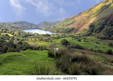 View of Llyn Gwynant in Snowdonia National Park Gwynedd North Wales