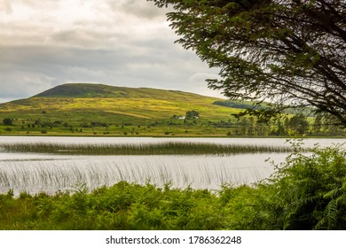 A view of Loch Stroan with a reed bed and the hills in the background, Galloway, Scotland