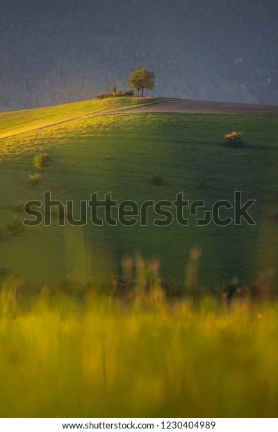 A view of a lone tree in autumn. A tree lone over the grazing grass fields. Slovakia