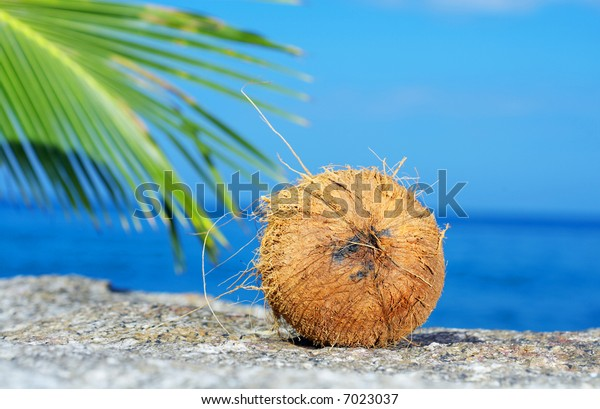 view of lonely fresh coconut on sea shore