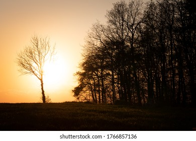 View of a lonely tree in front of the forest at sunset. Near the village Ovcary, the Czech Republic.