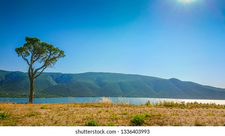 View of lonely tree and sea on Croatia and Bosnia and Herzegovina region
