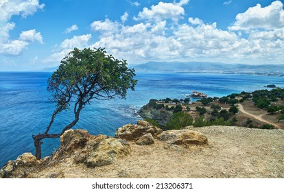 view of lonely tree and sea on Akamas peninsula, Cyprus