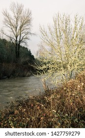 view of the long tom river through the trees near west kirk park in eugene oregon usa