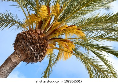 view of looking up a palm tree