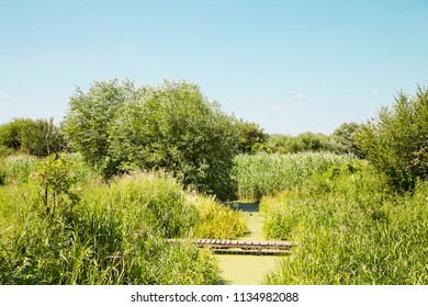 A view of lush marsh greenery of wildlife nature reserve in UK, Europe