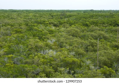 View of a mangrove forest in Florida from a high vantage point