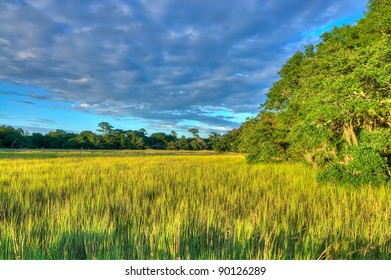 A View of the Marsh in Late Afternoon, South Carolina