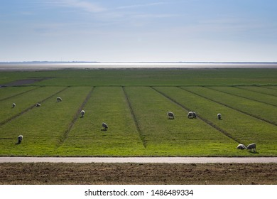 View to the marshland of the North Sea near Husum, Germany. Sheeps graze on the land, which is protected by dikes. The North Sea shows a strong alternation of ebb and flow.
