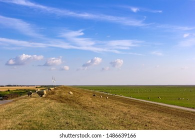 View to the marshland of the North Sea near Husum, Germany. Sheeps graze on the land, which is protected by dikes. Renewable energy with wind turbines in background