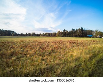 view of the meadow and forest in the distance, nature in Poland
