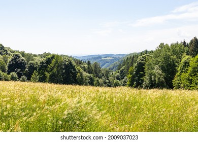 view of a meadow with forests and mountains in the background on a summer day